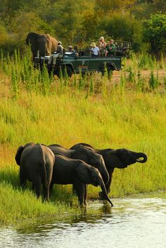 On a Safari in South Africa All About Africa, Out Of Africa, East Africa, African Animals, African Safari, British West Indies, Save The Elephants, Elephant Love, All Nature