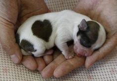 cute Baby Animals (20)
