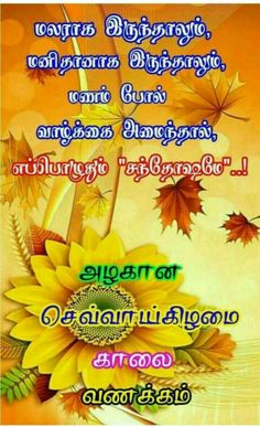 Tamil Wishes, Good Morning Beautiful Pictures, Tamil Bible Words, Good Morning Tuesday, Tamil Love Quotes, Good Night Greetings, Tuesday Quotes, Good Night Quotes, Picture Quotes