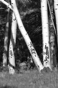 Nature's Alphabet on Pinterest | Alphabet Photography, Photo ...