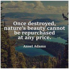 New nature quotes trees wisdom environment ideas Ansel Adams Quotes, Environment Quotes, Save Environment, Save Our Earth, Environmentalist, Beauty Quotes, Mother Earth, Mother Nature, Nature Nature