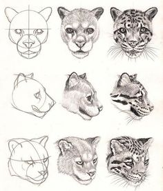 Heads of Clauded Leopard One of content Leopard eBook by Veri Apriyatno https://veri-art.com/products/drawing-leopard-with-pencil