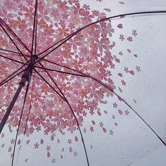 「 #160305 하늘이 파랗지 않아서 아쉽당 #벚꽃우산 」