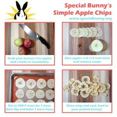 specialbunny.org.  this would be a neat treat to make for gerbils