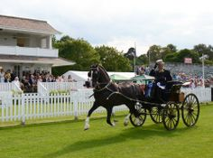 "BEAUTIFUL!  The British Drivng Society held their 50th annual show in Windsor, UK on Sunday. Here is the Supreme Show Champion, Eddie Smith, driving his Hackney Stallion ""Bladwins John Boy."" Eddie seen here saluted The Queen and Prince Philip who were watching for the day. (shared from Inharness magazine)"