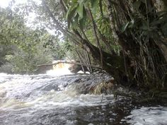 Cachoeira das araras.