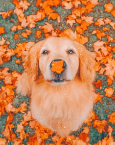 Fall Pictures, Fall Photos, Cute Pictures, Cute Fall Wallpaper, Cute Dogs And Puppies, Doggies, Autumn Aesthetic, Cute Little Animals, Cute Wallpapers