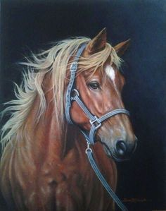 Pretty Horses, Beautiful Horses, Animals Beautiful, Horse Drawings, Animal Drawings, Horse Pictures, Art Pictures, Scratchboard Art, Horse Artwork