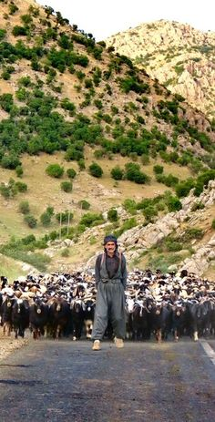 Kurdish Sheperd and his Flock crossing a Road in the Province Kurdistan, Iran. Photo by Payam Karimi