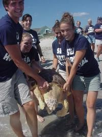 the karen beasley sea turtle rescue and rehab center, topsail, nc