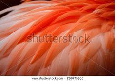 Foto d'archivio di PIUMAGGIO | Shutterstock