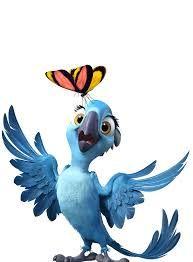 papagei rio - Hledat Googlem