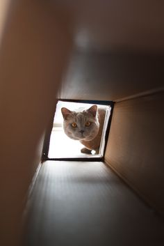 "* * KITTEH: "" Dis coulds beez a Time Tunnel."""