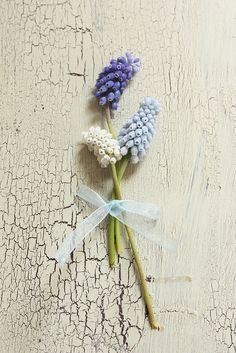 muscari or grape hyacinth blue or white. The light blue is hard to get. Option for Bridal bouquet as image of bouquet last sent Love Flowers, Beautiful Flowers, Wedding Flowers, Beautiful Images, Bulbous Plants, Color Violeta, Flower Quotes, Green Life, Belle Photo