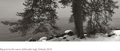 Kristoffer Albrecht, Big Pine by theWater, Kallerudd, Ingå, Finland, 2012