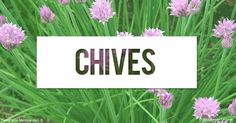Learn more about chives nutrition facts, health benefits, healthy recipes, and other fun facts to enrich your diet.