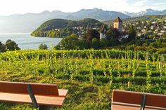 Our #WeeklyPicknickTipp of this week: Collect your prepared picnic basket and make your way to Spiez's 'energy spots'. Soak up the stunning lake and mountain views. :)  bit.ly/291qQ6S