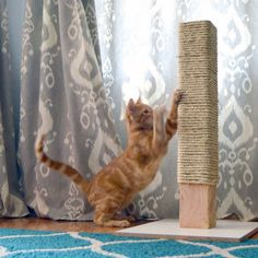 Keep your cat from scratching your carpet with this simple and inexpensive DIY rope scratching post!