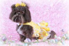 SPRING SPECIAL Event Dog Party Dress by JustForBella on Etsy, $125.00