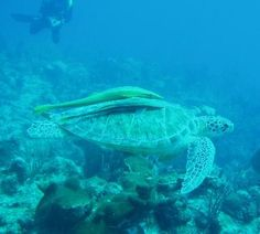 snorkeling corsica