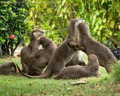 79c3f3630d19 1100 Best animals images