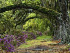Las ramas de los árboles forman una bóveda vegetal