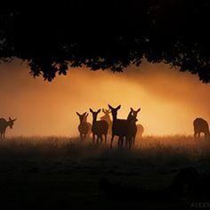 121Clicks :: Alex Saberi from London, England - Nature Photographer Portfolio