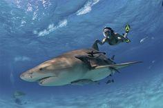 Shark Warrior Lesley Rochat -- she seems nuts!