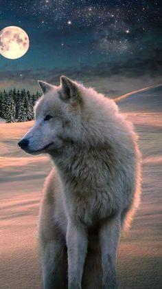 New Wolf Spirit Animal Art Full Moon Ideas Wallpaper Lobos, Wolf Wallpaper, Animal Wallpaper, Beautiful Wolves, Animals Beautiful, Cute Animals, Wolf Photos, Wolf Pictures, Wolf Artwork