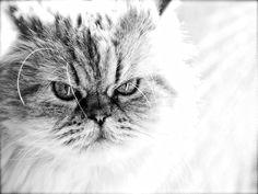 #Caturday...