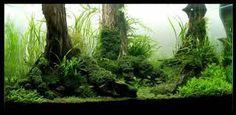 forest aquarium - Iskanje Google