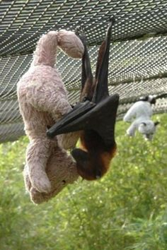 Bat makes a friend