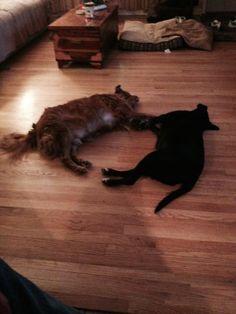 Hairy and Sophie, via owner Lissa Birmingham