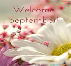Welcome September Pictures, Flowers Happy Flowers, Beautiful Flowers, September Pictures, September Quotes, Welcome September, Hello September, Sunflowers And Daisies, Tulips, Flower Close Up