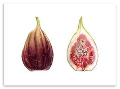 fig botanical - Google Search