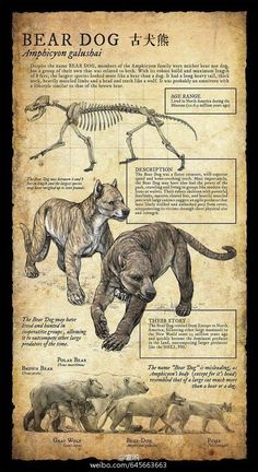 Koyash (shorter haired strains)/Abaracus (fluffier strains) Design and Illustration for extinct, prehistoric animal specimens and fossils, natural history museum signage. Prehistoric Creatures, Mythological Creatures, Extinct Animals, Cryptozoology, Creature Concept, Prehistory, Magical Creatures, Mammals, North America