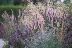 Deschampsia cespitosa, Teuchrium hircanicum et semis spontanée de Gypsophila paniculata - Le jardin de Triton via Facebook