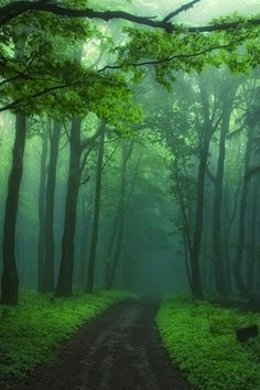 Druids Trees:  Into the #woods.