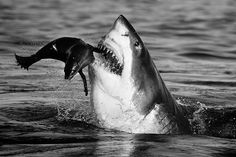 Credit: David Yarrow Photography They say a picture is worth a thousand words, but combine that picture with the story behind it and it's wo...