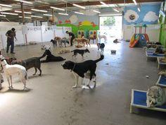 1000 Images About Dog Daycare On Pinterest Dog Daycare