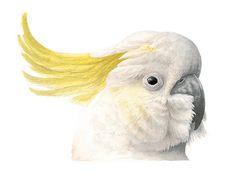 Sulphur-crested Cockatoo Original Watercolour by MatteoGrilliArt Watercolor Bird, Watercolor Illustration, Nature Artwork, Australian Birds, Face Expressions, Wildlife Nature, Bird Pictures, Cockatoo, Bird Art