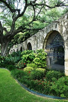 The grounds of the Alamo.  There are some beautiful, big ol' live oak trees.