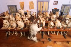 If Walter Potter's work ever comes to the US, I have to see it. Weirdest/coolest taxidermy ever.