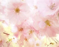 Cherry Blossom Tree Bokeh Art Print - Spring Pink Soft Flower Floral Wall Art Home Decor Photograph. $25.00, via Etsy.