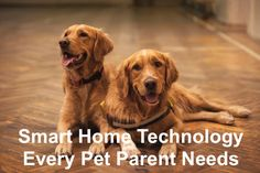 Smart Home Technology Every Pet Parent Needs #pet #petparent #dog #cat #home #realestate Love Dogs, Two Dogs, Cane Corso, Dog Booties, Dog Training School, Dog Urine, Dog Nails, Different Dogs, Retriever Puppy