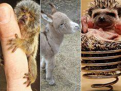 10 Super Small Baby Miniature Animals