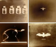 The Exploratory Photograms of Keith Carter Free Photography, Amazing Photography, Shadow Images, Sun Prints, Graffiti Tattoo, Alternative Photography, Photo Processing, Collage Art Mixed Media, Experimental Photography