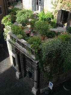 Haus Design: Roof Top Garden