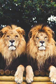 This picture is just amazing to me.Look at those two,Wow !!So beautiful.Anyone that could kill these animals needs to be put in jail for a long time.