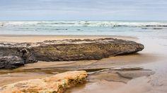 Lignite on Ripiro Beach Longest Drivable Beach in NZ